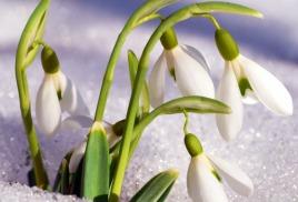 Конкурса «Первоцветы – вестники весны!»
